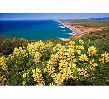 Shoreline with Yellow Wildflowers Photographic Print