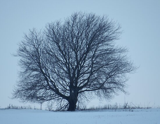Winter Tree by lorilee
