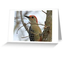 Red bellied woodpecker profile Greeting Card