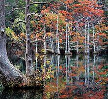 In The Cypress Swamp by Carolyn  Fletcher