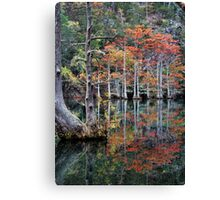 In The Cypress Swamp Canvas Print
