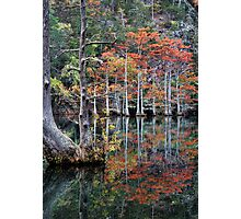 In The Cypress Swamp Photographic Print