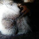 Sleeping beauty by abbycat