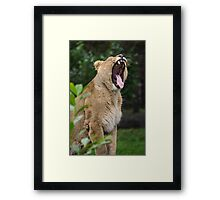 A Roaring Momment Framed Print