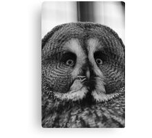 The Great Grey Owl Canvas Print