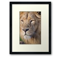 Lions Eye Framed Print