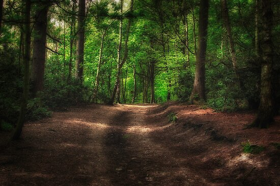 Great Heads Wood Roundhay Park (HDR) by Tim Waters