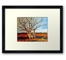 Outback Boabs Framed Print