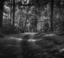 Great Heads Wood Roundhay Park B&W (HDR) by Tim Waters