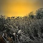 Out In The Cold by Charles & Patricia   Harkins ~ Picture Oregon