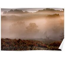 Pony in the morning mist Poster