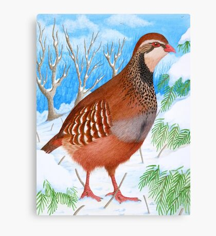 The Red-Legged Partridge by Véronique Cole Canvas Print