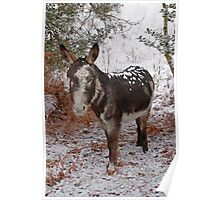 New Forest Donkey Poster