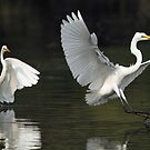 """""""An Egret in flight."""" by debjyotinayak"""