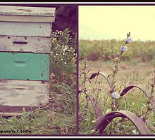 Honey Bees. by Wildflower77