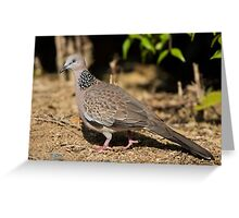 Spotted Dove (1) Greeting Card