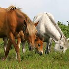 New Forest Ponies by Lisa  Baker-Richardson