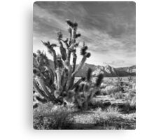 Joshua Tree, Red Rock Canyon National Conservation Area, Nevada Canvas Print