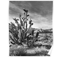 Joshua Tree, Red Rock Canyon National Conservation Area, Nevada Poster