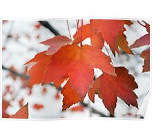 Red Autumn Poster