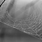 Lonely Web by ©Dawne M. Dunton