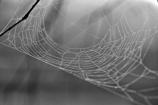 Lonely Web by ©Dawne M. Dunton