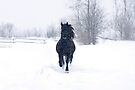 Dashing through the snow by Jim Cumming