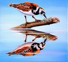 Ruddy Reflection by Phyllis Beiser