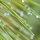 Droplets by Dawne Dunton