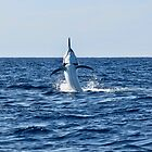 Marlin Canvas or Print - Giant Black Marlin - Spread 'Em by blackmarlinblog