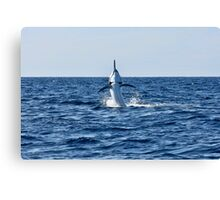 Marlin Canvas or Print - Giant Black Marlin - Spread 'Em Canvas Print