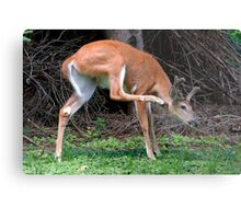 Man, I've Got An Itch, Right Here! Metal Print