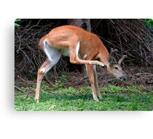 Man, I've Got An Itch, Right Here! Canvas Print