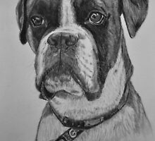 Hector the Boxer by Tricia Winwood