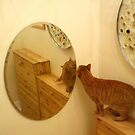 Mirror cat by impossiblesong