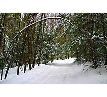 Snowy Lane Photographic Print