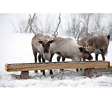 Vacation for Rudolph the Reindeer Photographic Print
