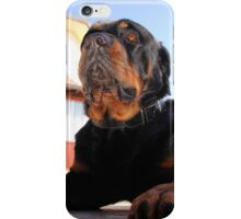 Regal and Proud Male Rottweiler Portrait iPhone Case/Skin