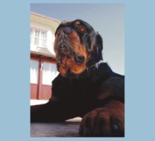 Regal and Proud Male Rottweiler Portrait Baby Tee