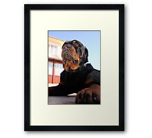 Regal and Proud Male Rottweiler Portrait Framed Print
