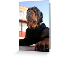 Regal and Proud Male Rottweiler Portrait Greeting Card