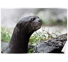 River American River Otter Poster