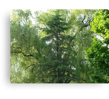 A bunch of trees Canvas Print