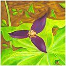 Trillium Flower by Asher Davidson