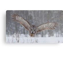 Great Gray Owl Moving In... Metal Print