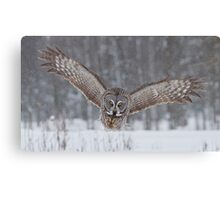Great Gray Owl Moving In... Canvas Print