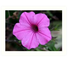 Perfect Pink Petunia Art Print