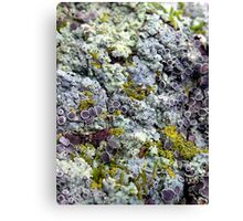 Of Many Colors Canvas Print