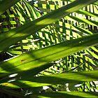 Checkered Garden by Rosie Brown