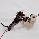 Puppy Love by Tamara Brandy